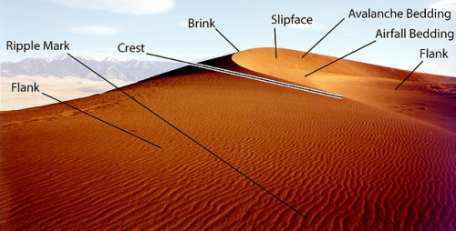 anatomy of a dune
