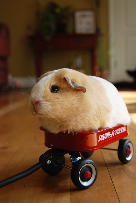 concretepillow:  natislost:  they see me rollin'.. they hatin'..  :3 :D