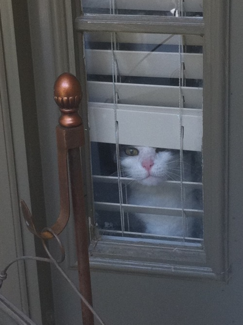 my neighbor's cat answers the door lol :)