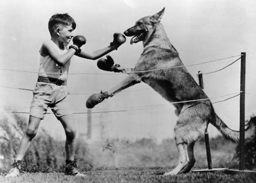 blackandwtf:  Date unknown A boy boxes a dog.