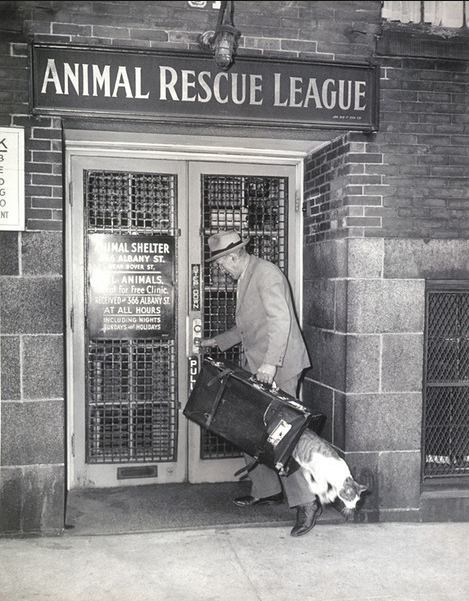 blackandwtf:  1930s A cat escapes from the Animal Rescue League.  (via online photographer and dreams like this)