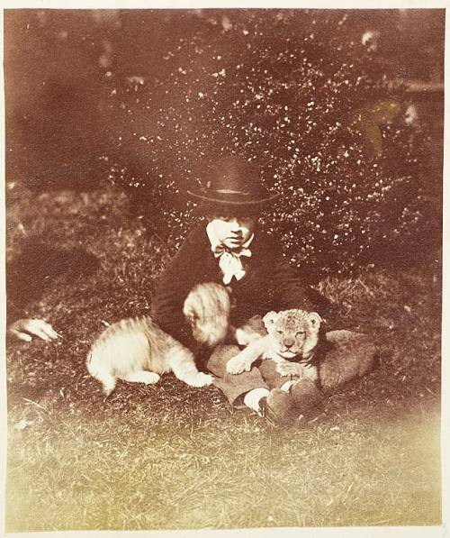 blackandwtf:  1850s A child with his cubs. (via dreaming like that)