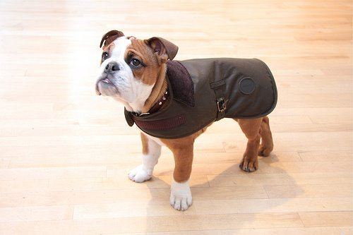 corkgrips:  i can't believe they make barbour jackets for dogs
