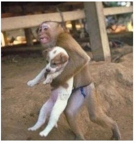 Here's a picture of a monkey carrying a puppy. What better way to start on Tumblr?