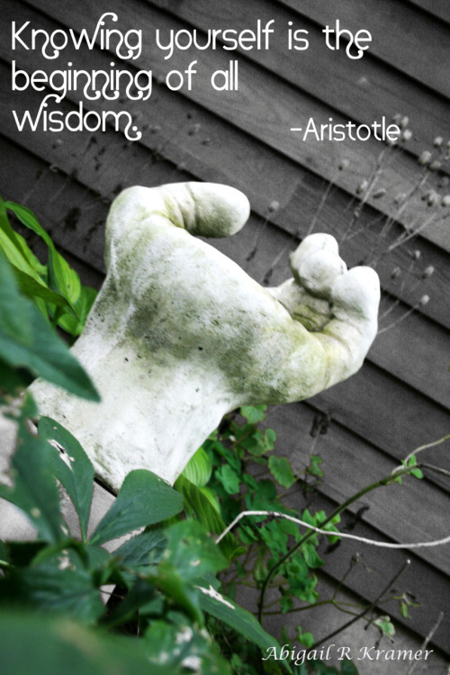 Aristotle knows best. Took this from my garden and though the quote looked great with it.