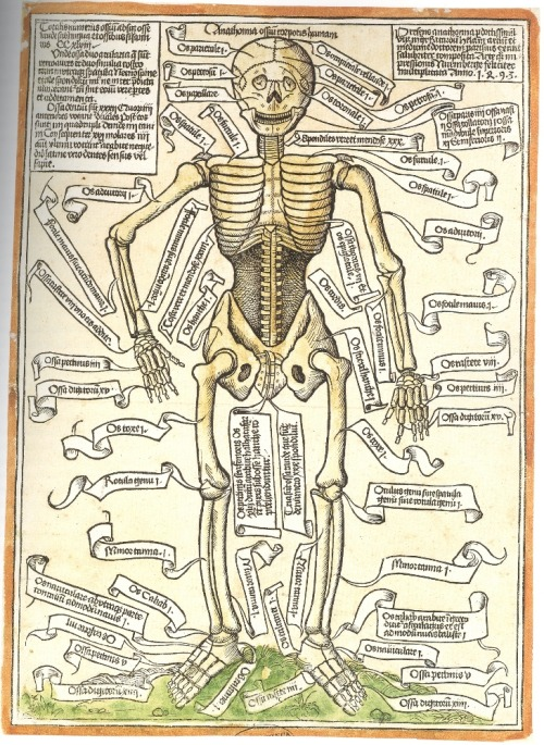 lonerwitch:  Anathomia ossium corporis humani, the oldest surviving anatomical rendering of the human skeleton. Apparently this caused an uproar in the science world after nearly eight centuries of repression by religious groups that maintained hegemony throughout the dark ages. Hieronymus Brunschwig, 1497.