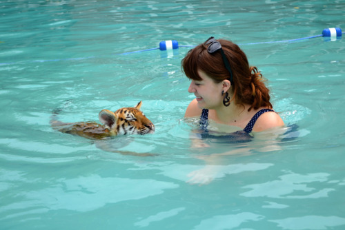 blueberrynocturne:  Why yes, that is a picture of me swimming with a tiger cub. It's also my birthday. Funny you should ask.