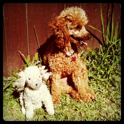 "Mim and ""Baby"", which used to be my stuffed poodle but she has since claimed and made it into her daughter. She treats Baby like royalty, always so gentle with her."