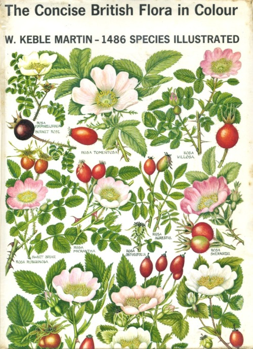 The Concise British Flora in Colour by Rev. W. Keble Martin, first published in 1965, with 1486 botanical species - illustrated. I love the British…they are so concise. (And I just ordered my own antiquarian copy!)