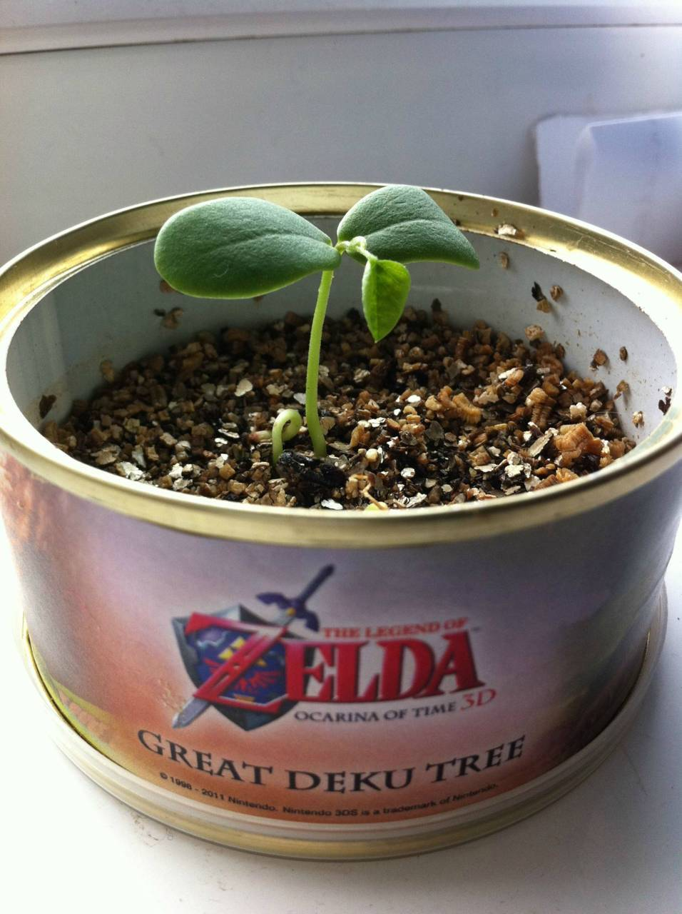 I want a Deku Tree!