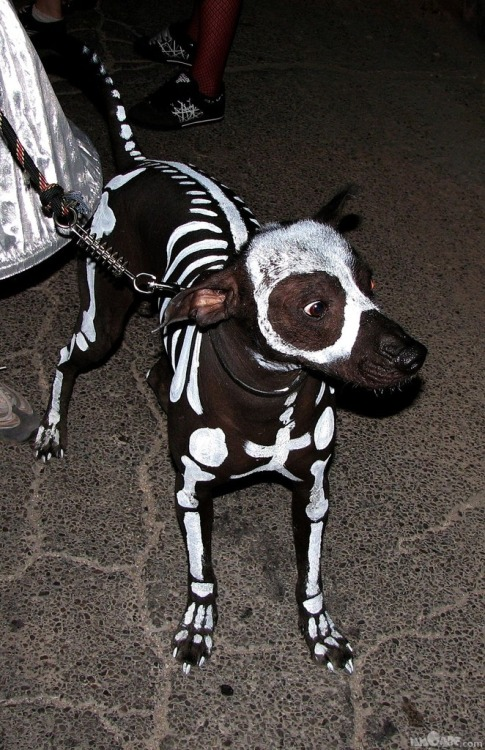 just-like-the-movies:  Mikey, watch out.. this is you.. Halloween. tehe.