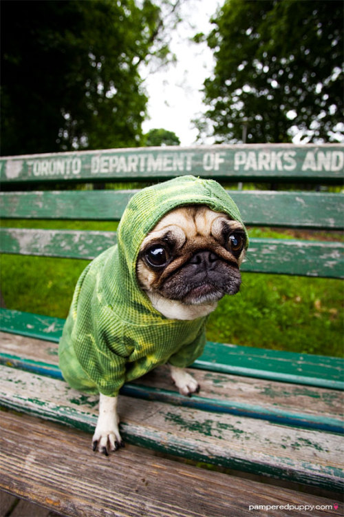 boodapug:  Little Green Alien Pug from Merrylog