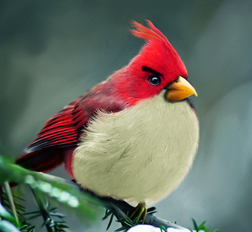 slydisguise:  Natural angrybird by =mohamedraoof  ^ YES.