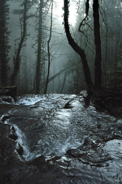 ominousplaces:  Forest. By lawra.