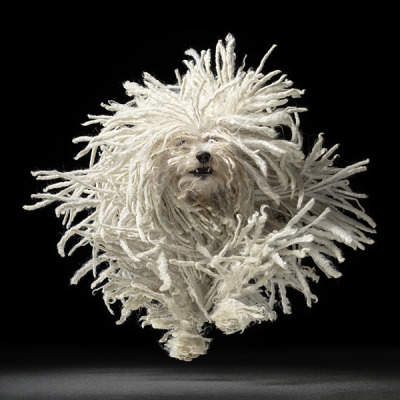 photographer : Tim Flach