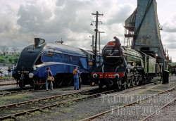 Image: (From left to right) LNER class A3 No.4472 Flying Scotsman & Class A4 No.4468 Mallard lined up at Carnforth.   Steamy Talks No.19: The Meeting Of Two Legends Mallard: Ahhh… What charmed lives we live… Don't you agree, my old friend? Flying Scotsman: You can say that again. Mallard: It's not very often you and I get to see one another is it? Flying Scotsman: Well we're busy popular engines, so many people, but only two of us. We travel all over the place.  Mallard: I'm just glad to be running, it's nice in the museum, but I've missed running on the mainline. Flying Scotsman: Well I think you're lucky, being part of the national collection. I wouldn't mind having that sense of security of being part of the national collection, the financial troubles my previous owners have had… Sometimes, I really don't know what will happen to me in the future…  Mallard: Don't worry Flying Scotsman, you're the world's most famous steam locomotive. I'm sure even that someday you'll join the collection, It was disgraceful that you weren't part of it to begin with! Flying Scotsman: Thanks, Mallard… Mallard: Think nothing of it, old chap.