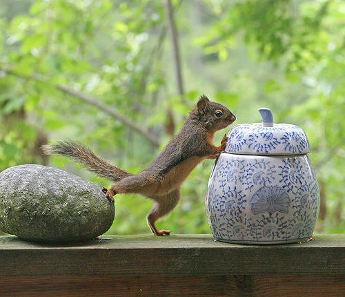 stepping stones scoutit:  Kung-Fu- Squirrel - Who's Been In The Cookie Jar? by Peggy Collins
