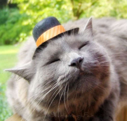 etsygoodies:  Top Hat for Cats