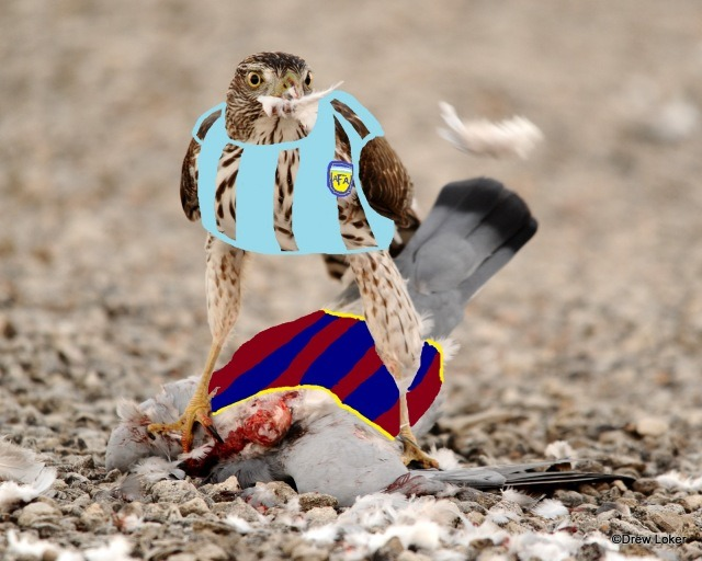 Messi is growing up, getting mad. He was a dove, but he's turning into a hawk. Hawks eat doves. Read about it here.