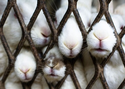 Poor tiny noses…  nevver:  Bunnies