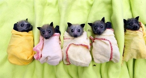 stentorian-loathsome-girl:  twinkle, twinkle little bat!