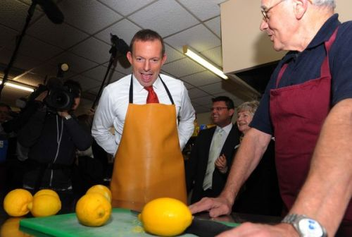 tonyabbottlookingatthings:  looking at lemons