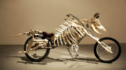 plusbien:  Mad Cow Motorcycle, Billie Grace Lynn (Cow Bones, Bicycle Frame, Electric Motor) 2008