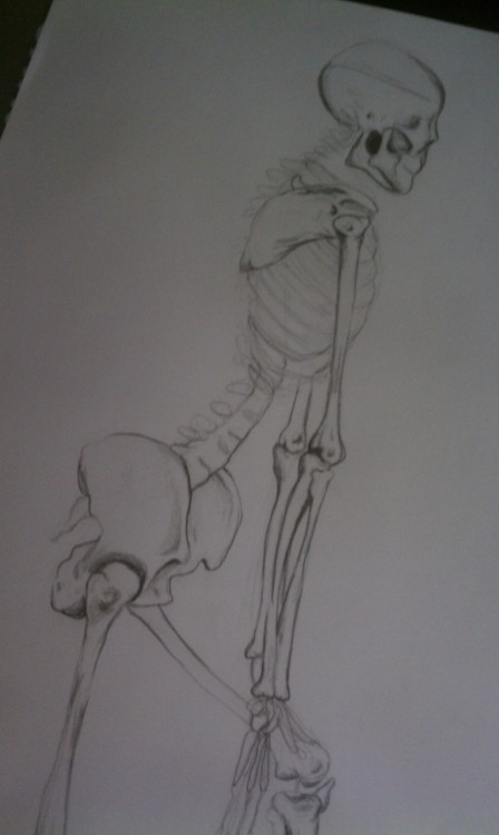 atmosphererose:  my anatomy drawing of the human form (skeleton) for Life drawing.  Haha!!! The pose!!!!!!! Love.