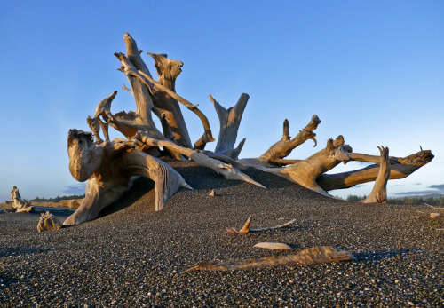 Driftwood, Oregon coastline