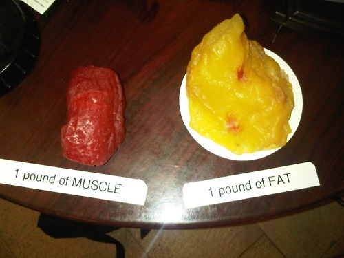 1lb of Muscle vs. 1lb of Fat  One pound of muscle will burn ~10 kcal per day.  The pound of fat will burn ~3 kcal per day.  Weight is a poor measurement of fat loss, for obvious reasons.  So, you lost a pound? That's a pretty big deal. Lift heavy stuff and eat enough and you'll build more muscle which will allow you to burn more fat and get the look of muscular definition that you desire. Starving yourself and doing cardio for fat loss are a sure fire way to keep your muscles from growing properly and never reaching your full potential. Go lift weights. If you want to track your progress accurately then you should use some sort of journal to log your body's measurements and strength changes or take progress pictures on a regular basis. Stay off the scale.
