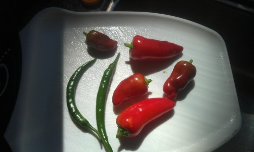 Fresh chilies for my chili tonight