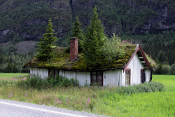 trees on roof | lovelylittleobsessions:  i want a green roof!