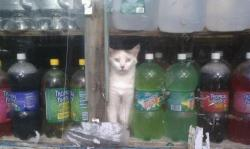 Nothing beats a cat hidden among the dusty sodas peering out the window. I love it.