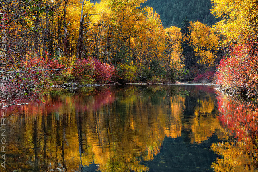 lori-rocks: I Dream In Color  By Aaron Reed