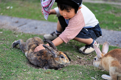 japanlove:  THE RABBITS ISLAND ~ TOUCH (by junog007)