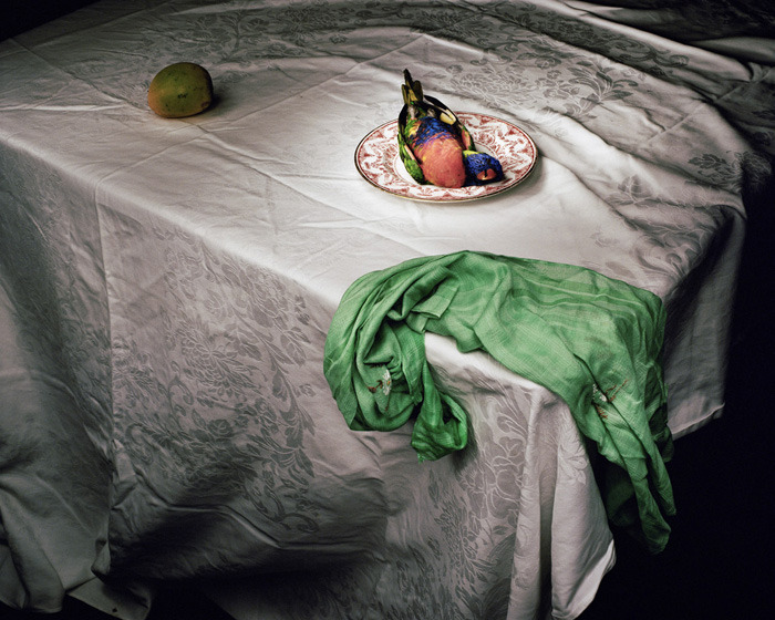 3wings:  'Lorikeet with green cloth' 2006Marian Drew