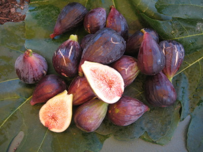 ediblegardensla:  The fig tree is dripping with fruit.  Ripe, soft, dark figs hang from everywhere.  They are delicious but, there are so many.  What to do?  Donate to a local food pantry.  Ample Harvest is an extraordinary organization that helps you do just that.  Gardeners with a surplus of fruit and vegetables can get those foods to families in need by giving them to local food pantries. Please click the photo above to learn more.