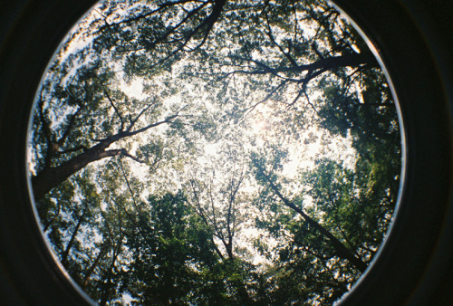 fallenwaffles:  Taken with my 35mm Lomography Fisheye 2.  It was a random present from my husband.  <3