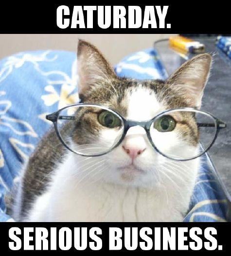 Oh. Right. Back to Caturday. Because it's serious business.