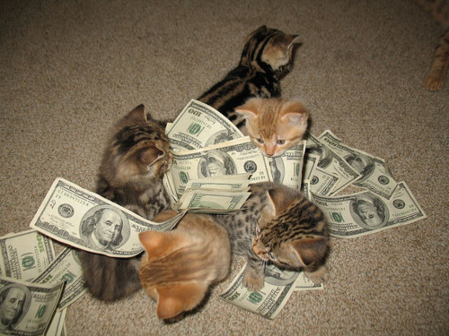 Mo' money, mo' kittehs, mo' problems