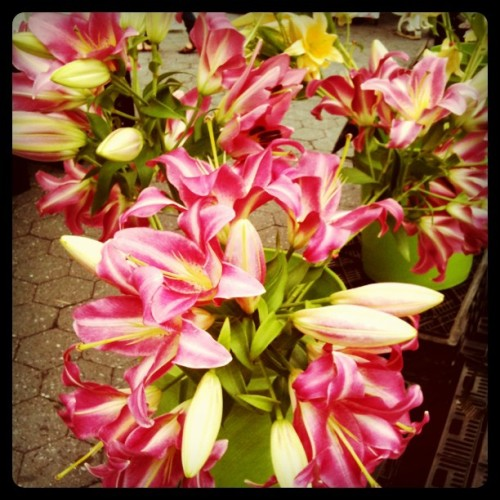 Lilies at Union Square Greenmarket (Taken with instagram)