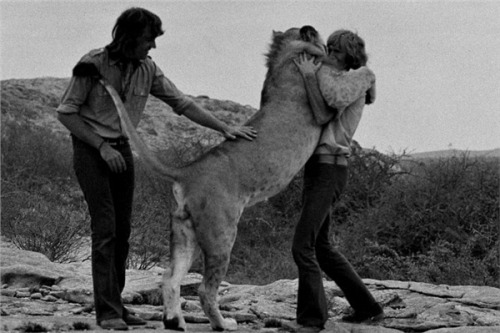 caughtinthemadness:  Christian the Lion. The most beautiful true life story of two men and a lion cub that they adopted and nurtured. A lion that never forgot them even after they released him into the wild. :')