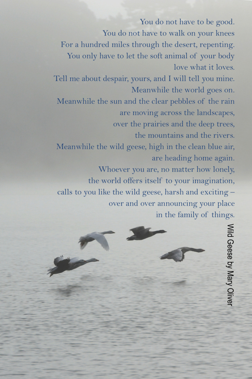 what elements are used in mary oliver s wild geese Mary oliver is one of our era's most  i used to whistle, a long  complement it with oliver on how rhythm sweetens life and her beautiful reading of her poem.