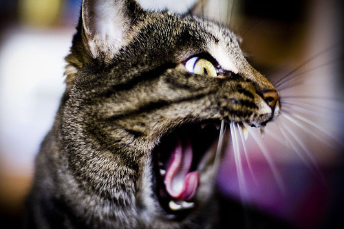 """Nooooo, don't touch my human!!!"" Photo by ©(davide)"