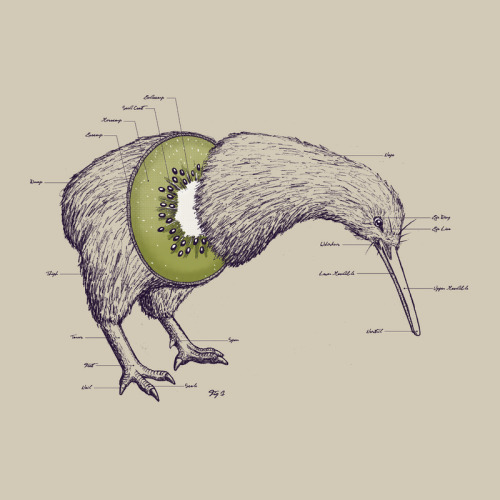 oliphillips:  Kiwi Anatomy  by William McDonald