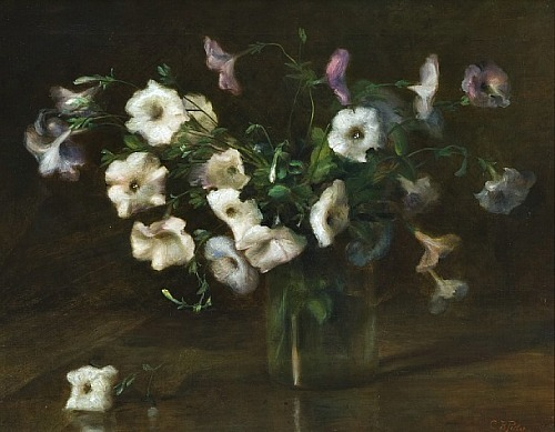 Charles Porter Petunias Late 19th - early 20th century
