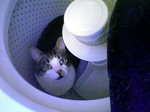 get out of there cat. you don't belong in the washing machine. i know you think that it would be amazing fun, but you are little and the centrifugal force from the spin cycle would probably not be pleasant for you.