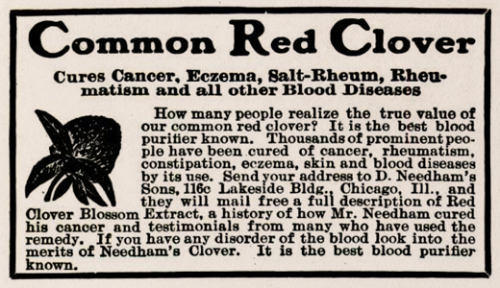Common Red Clover, 1905