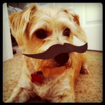 DON'T FEAR THE MUSTACHE & VOTE FOR BENJI SO HE CAN GET FREE FOOD! JUST CLICK HIS HANDSOME FACE THANKS!  *All you have to do is sign on through your FB and we all know everyone has a FB.