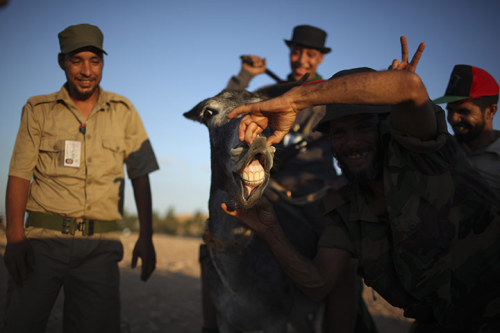 Bani Walid, Libya: Former rebels play  with a donkey on the outskirts of the town, one of the last remaining  bastions of Muammar Gaddafi Photograph: Alexandre Meneghini/APSee more pictures here.